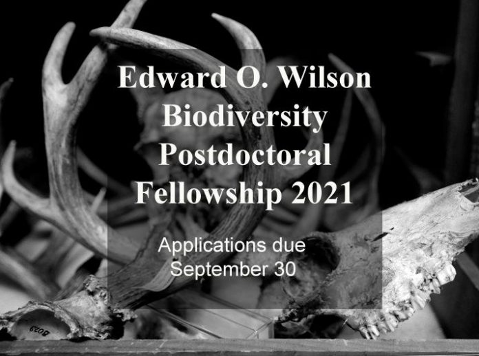 Fellowship opportunity, Postdoctoral  fellowship, Postdoctoral research, Opportunity for researchers, Fellowship program, Postdoctoral research fellowship, Graduate fellowship, International fellowship, Postdoctoral position, Postdoctoral  studies, USA opportunities, International Opportunities, Edward O. Wilson Biodiversity Postdoctoral Fellowship